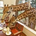 Café girafe