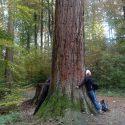 CNV et autres approches   Un bain de forêt pour refaire le plein d'énergie – CNV et Nature   Angela Boss
