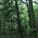 CNV et autres approches | Un bain de forêt pour refaire le plein d'énergie – CNV et Nature | Angela Boss